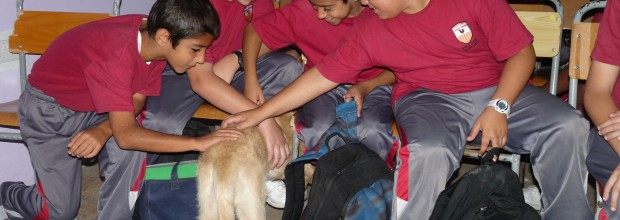 Animal Awareness Activity for Form 1s